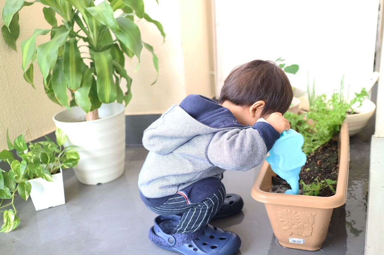 ベランダ菜園に熱心に水やりをしてくれる息子