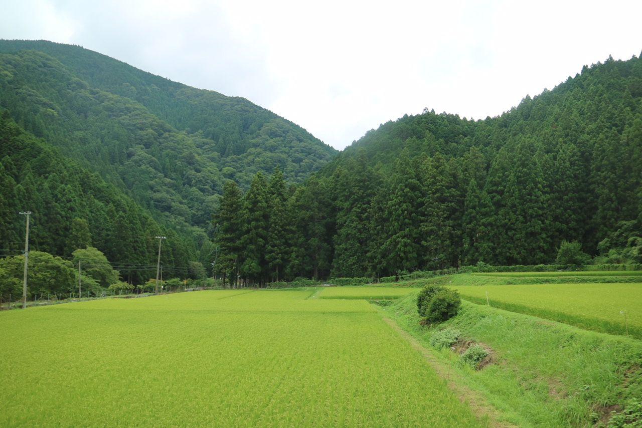 お盆帰省は一面の緑を眺めてのんびりと
