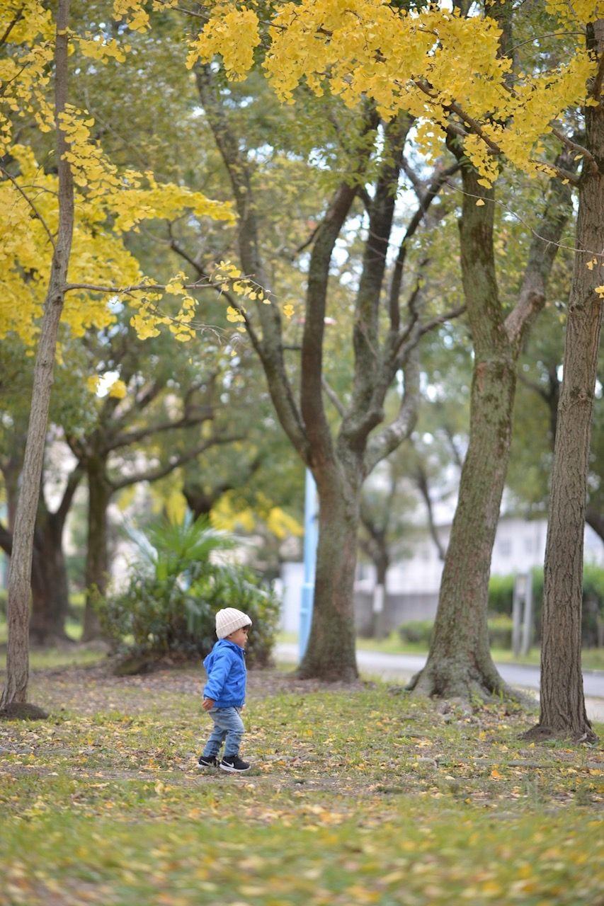 イチョウ並木をお散歩♪