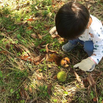 2歳児と楽しむ、秋の栗ひろい体験