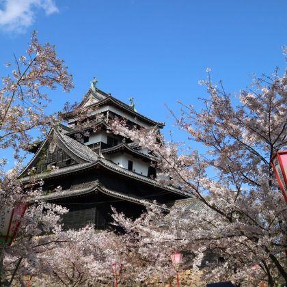 松江城と桜