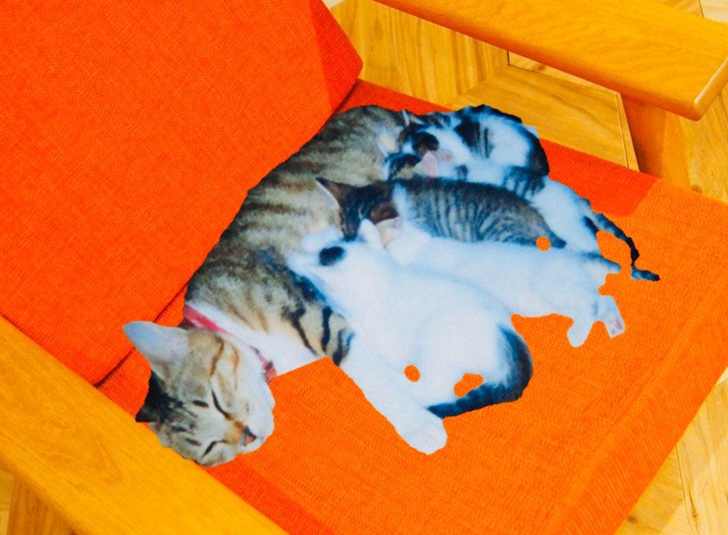 スロウソファに寝る猫の親子