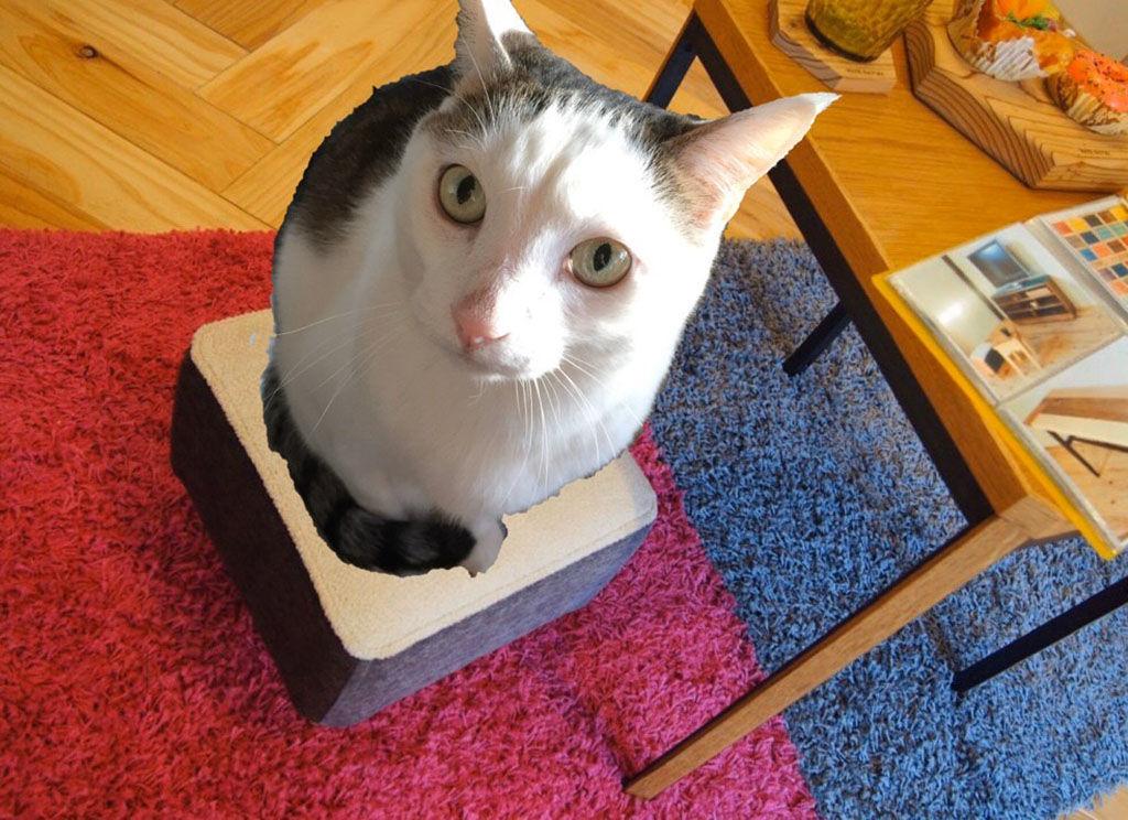 モンペスツールに座る猫