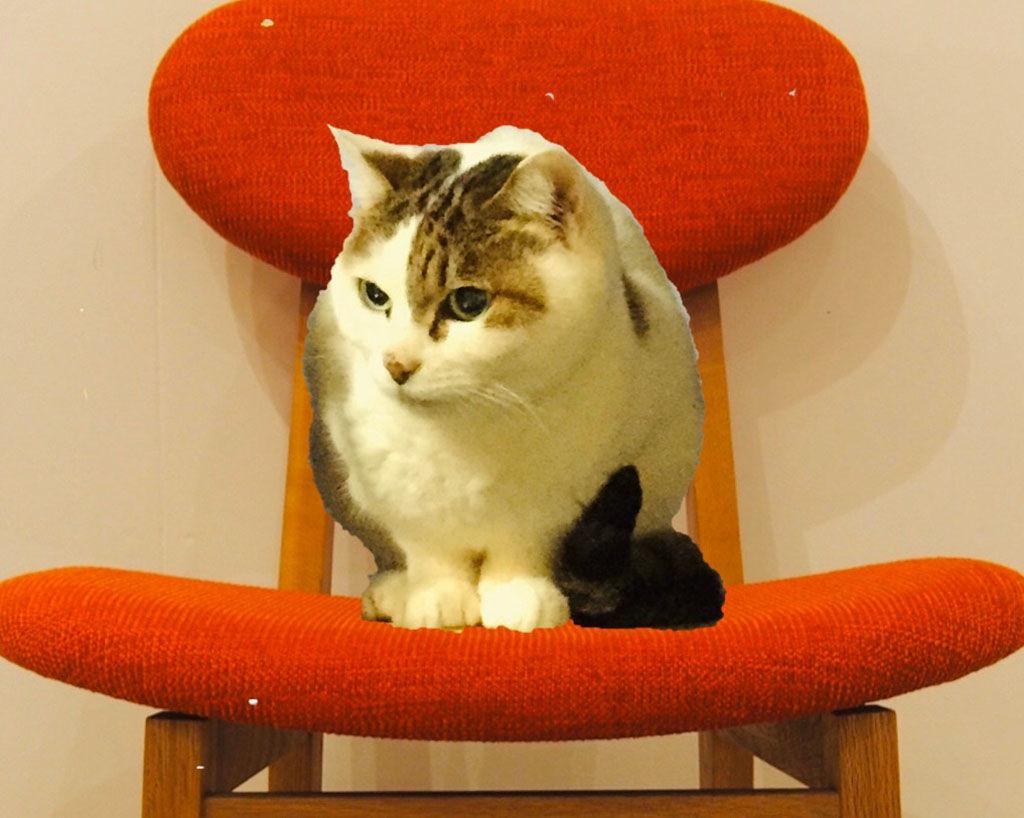 カームチェアに座る猫