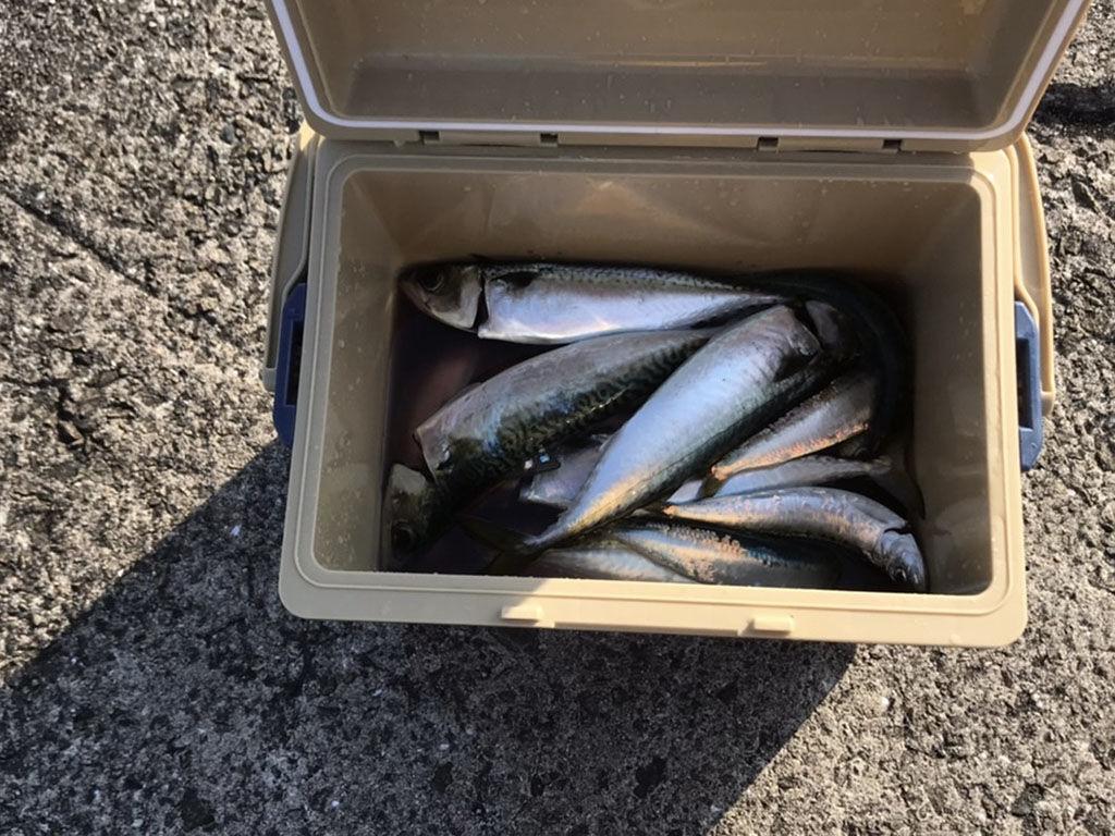 初めての釣りの成果