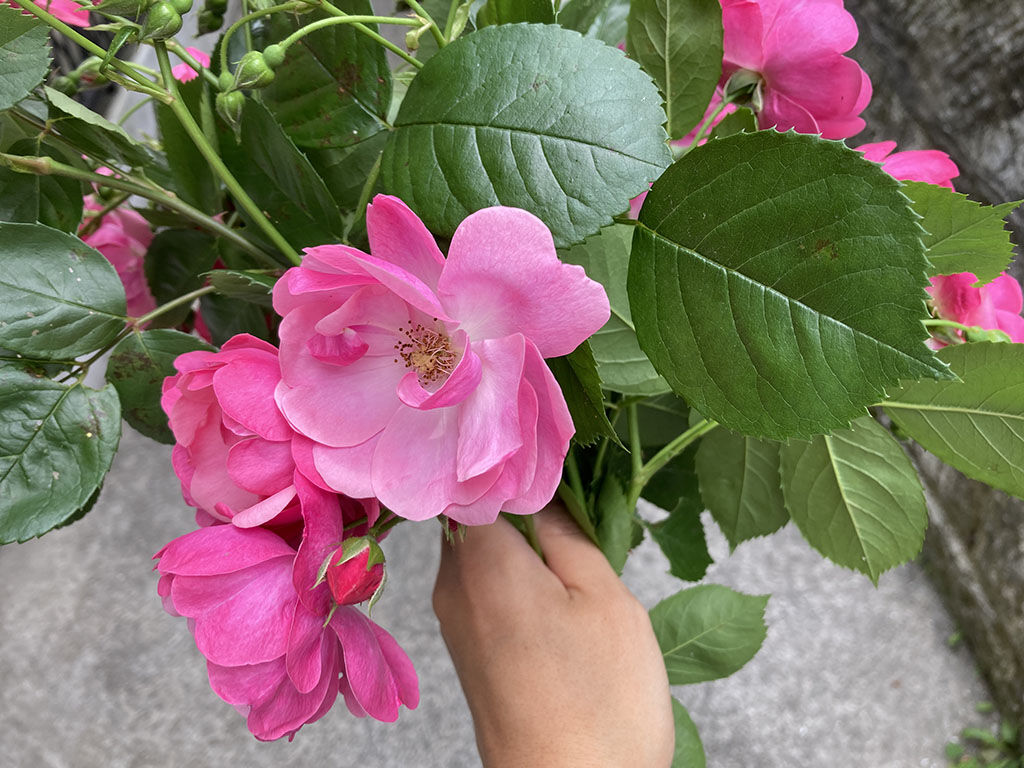 綺麗なお花を持ってお店の2階から降りてきた店長の山本さん