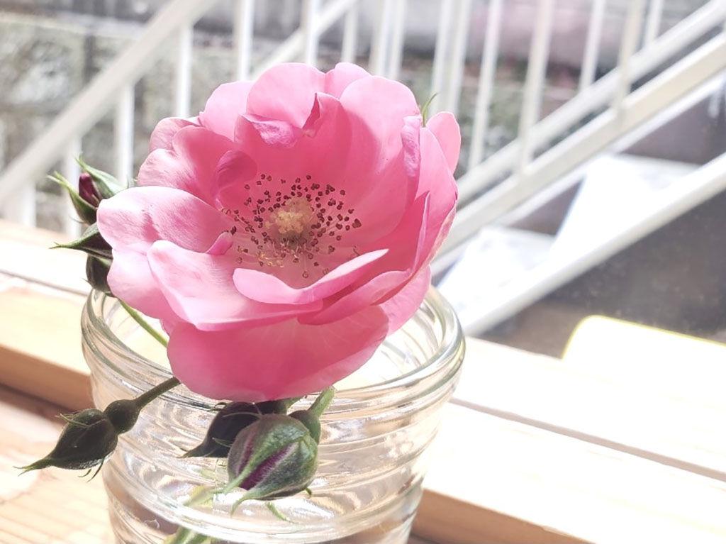 一輪挿しでも華やかな香りの頂いたお花